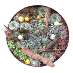 Nye, flotte plantekummer til have eller altan?